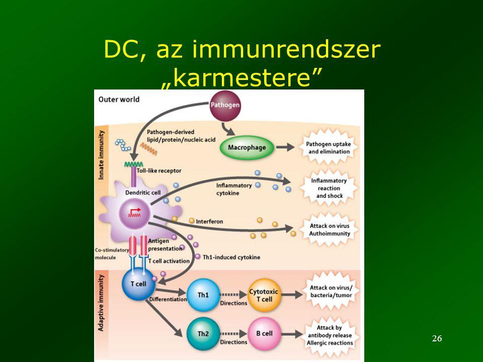 """26 DC, az immunrendszer """"karmestere"""""""