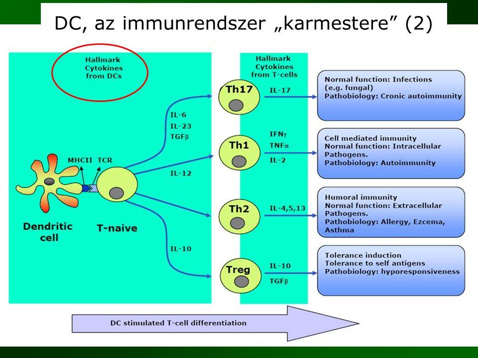 """27 DC, az immunrendszer """"karmestere"""" (2)"""