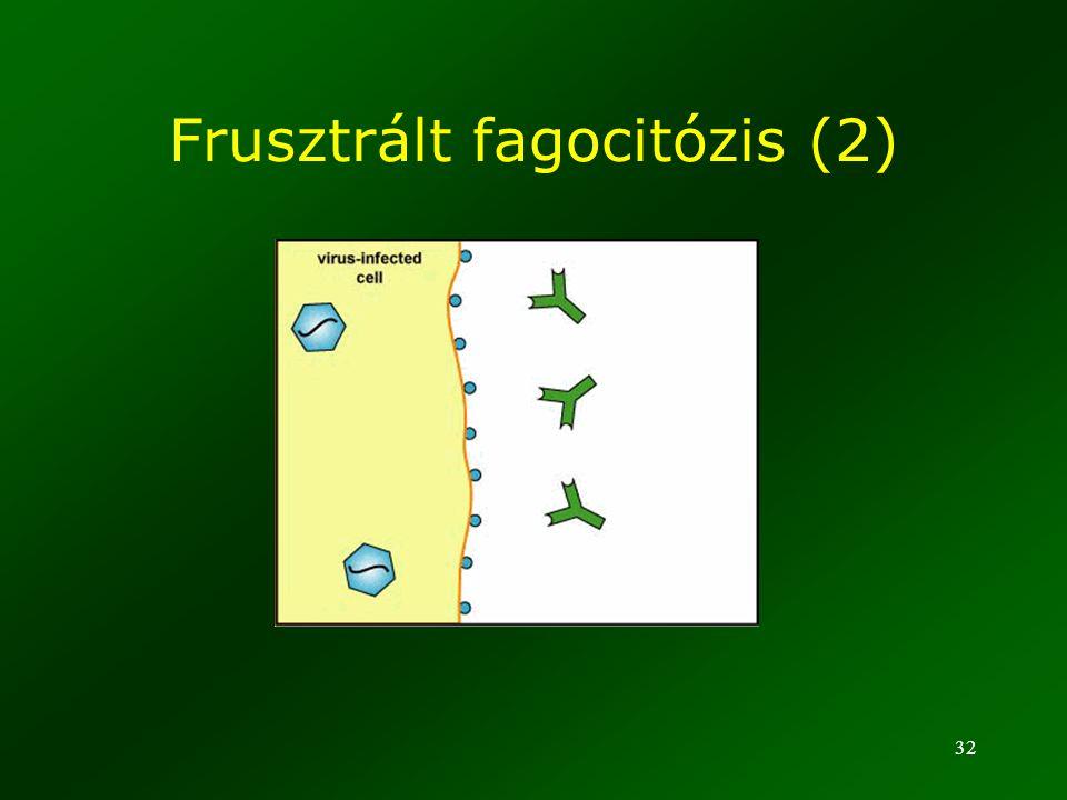 32 Frusztrált fagocitózis (2)