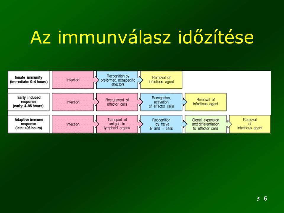 5 5 Az immunválasz időzítése