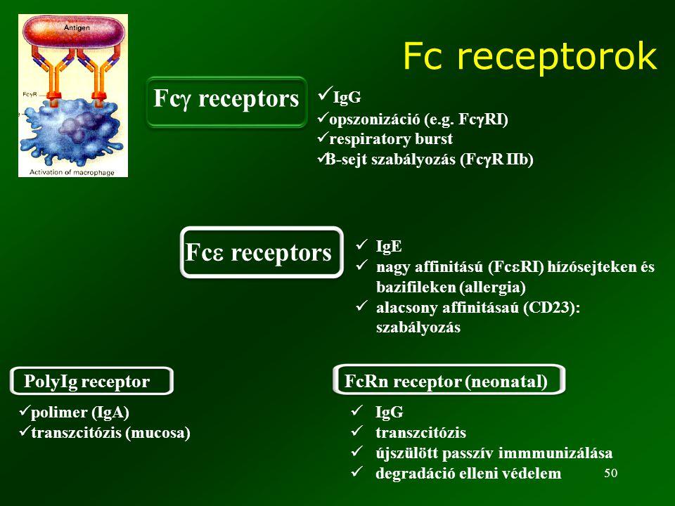 50 IgG opszonizáció (e.g. Fc  RI) respiratory burst B-sejt szabályozás (Fc  R IIb) IgE nagy affinitású (Fc  RI) hízósejteken és bazifileken (allerg