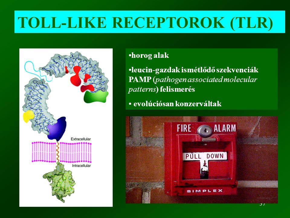 57 TOLL-LIKE RECEPTOROK (TLR) horog alak leucin-gazdak ismétlődő szekvenciák PAMP (pathogen associated molecular patterns) felismerés evolúciósan konz