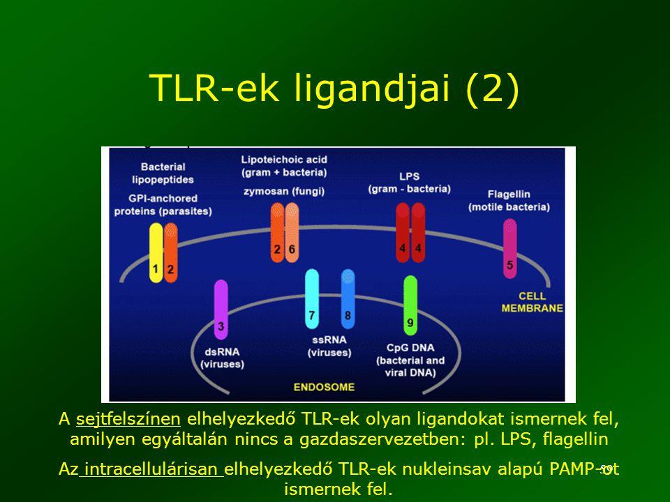59 A sejtfelszínen elhelyezkedő TLR-ek olyan ligandokat ismernek fel, amilyen egyáltalán nincs a gazdaszervezetben: pl. LPS, flagellin Az intracellulá