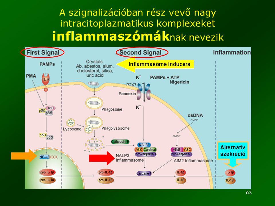 62 A szignalizációban rész vevő nagy intracitoplazmatikus komplexeket inflammaszómák nak nevezik Inflammasome inducers Alternatív szekréció