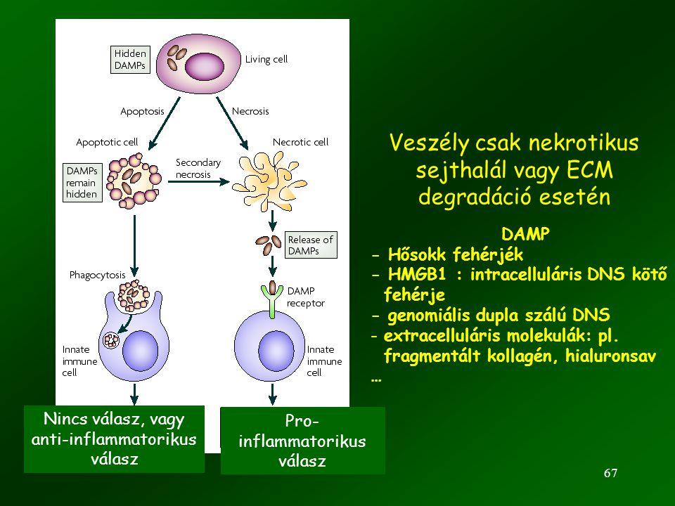 67 Veszély csak nekrotikus sejthalál vagy ECM degradáció esetén Nincs válasz, vagy anti-inflammatorikus válasz Pro- inflammatorikus válasz DAMP - Hőso