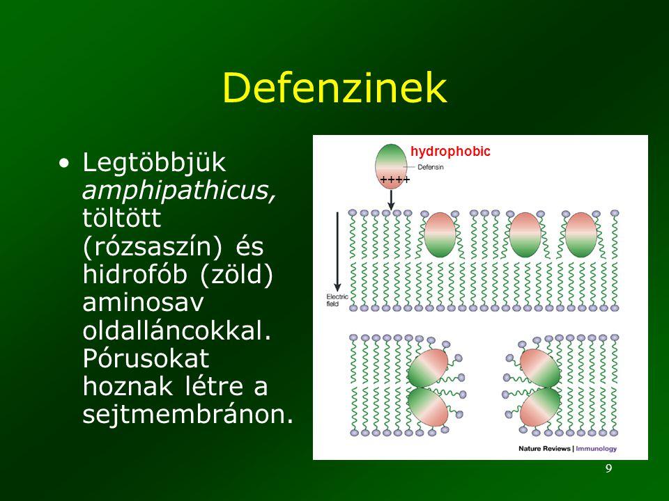 9 Defenzinek Legtöbbjük amphipathicus, töltött (rózsaszín) és hidrofób (zöld) aminosav oldalláncokkal. Pórusokat hoznak létre a sejtmembránon. ++++ hy