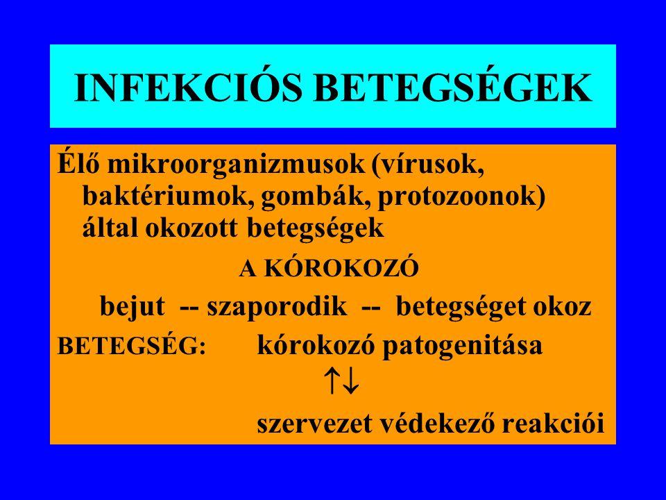 INFEKCIÓS BETEGSÉGEK Élő mikroorganizmusok (vírusok, baktériumok, gombák, protozoonok) által okozott betegségek A KÓROKOZÓ bejut -- szaporodik -- betegséget okoz BETEGSÉG: kórokozó patogenitása  szervezet védekező reakciói