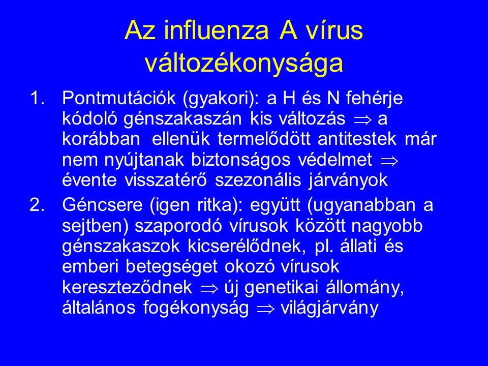 A kórokozó RNS vírus, nagy változékonyság jellemzi Három típus: A, B és C - B és C: kevésbé változékonyak, kisebb szezonális járványokért felelősek, e