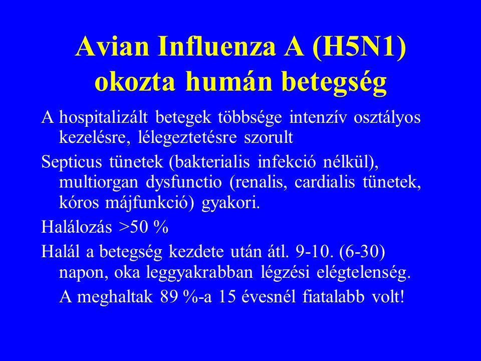 Avian Influenza A (H5N1) okozta humán betegség Alsó-légúti tünetek: fokozódó köhögés, dyspnoe, tachypnoe. Köpet változó, néha véres Mellkas rtg: diffú