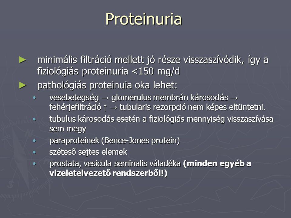 Proteinuria ► proteinuria mennyisége:  microalbuminuria: 30-150mg/nap (hypertonia, diabetes monitorozás)  enyhe 0,3-1 g/d  közepes 1-3 g/d  masszív > 3 g/d (nephrosis szindroma, DM glomerulosclerosis) ► proteinuria eredete  glomeruláris ► szelektív (max 70 000 D méret)  enyhe károsodásban mérsékelt permeabilitás növekedés  < 70 000 D tömegű fehérjék termelődése ► nem szelektív  súlyos glomerulus károsodás következtében nagy molsúlyú fehérjék is filtrálódnak  tubuláris ► tubulus károsodás miatt csökkent rezorpció ► sérült tubulusokból is protein ürül ► tubulus károsodás glomerulus károsodással társul