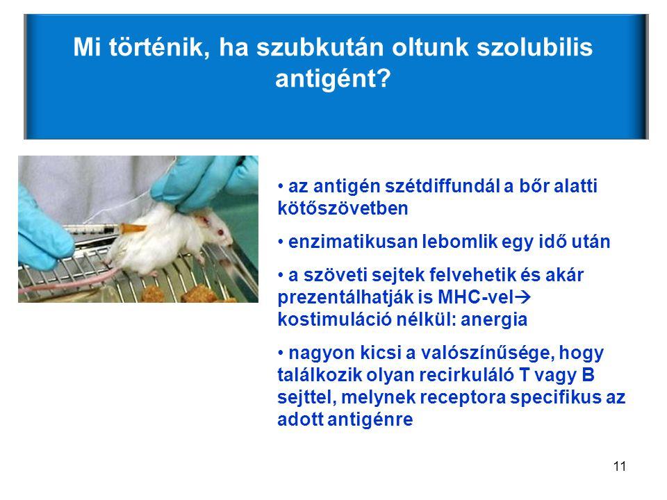 11 Mi történik, ha szubkután oltunk szolubilis antigént.
