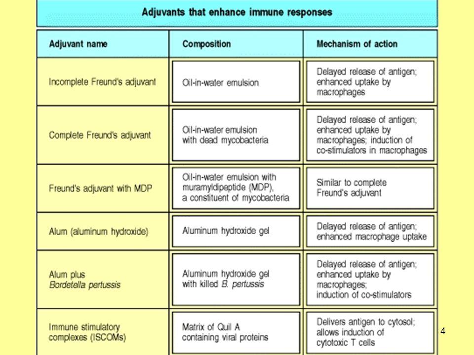 15 Mi tehetünk annak érdekében, hogy növeljük a specifikus receptorral rendelkező limfocitával való találkozás esélyét Az antigén lassú felszabadulását eredményező adjuváns alkalmazása (pl.