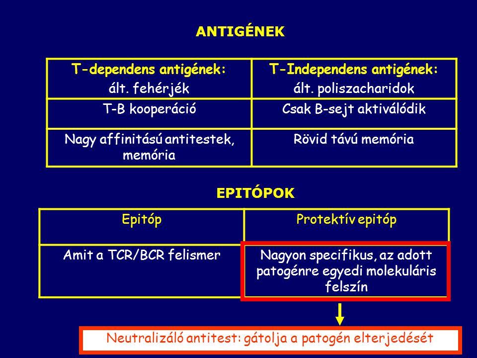 26 ANTIGÉNEK T-dependens antigének: ált.fehérjék T-Independens antigének: ált.
