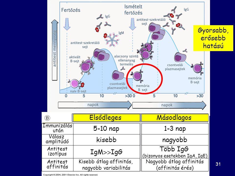 31 Immunizálás után Válasz amplitúdó Antitest izotípus Antitest affinitás ElsődlegesMásodlagos 5-10 nap1-3 nap kisebbnagyobb IgM  IgG Több IgG (bizonyos esetekben IgA, IgE) Kisebb átlag affinitás, nagyobb variabilitás Nagyobb átlag affinitás (affinitás érés) Gyorsabb, erősebb hatású