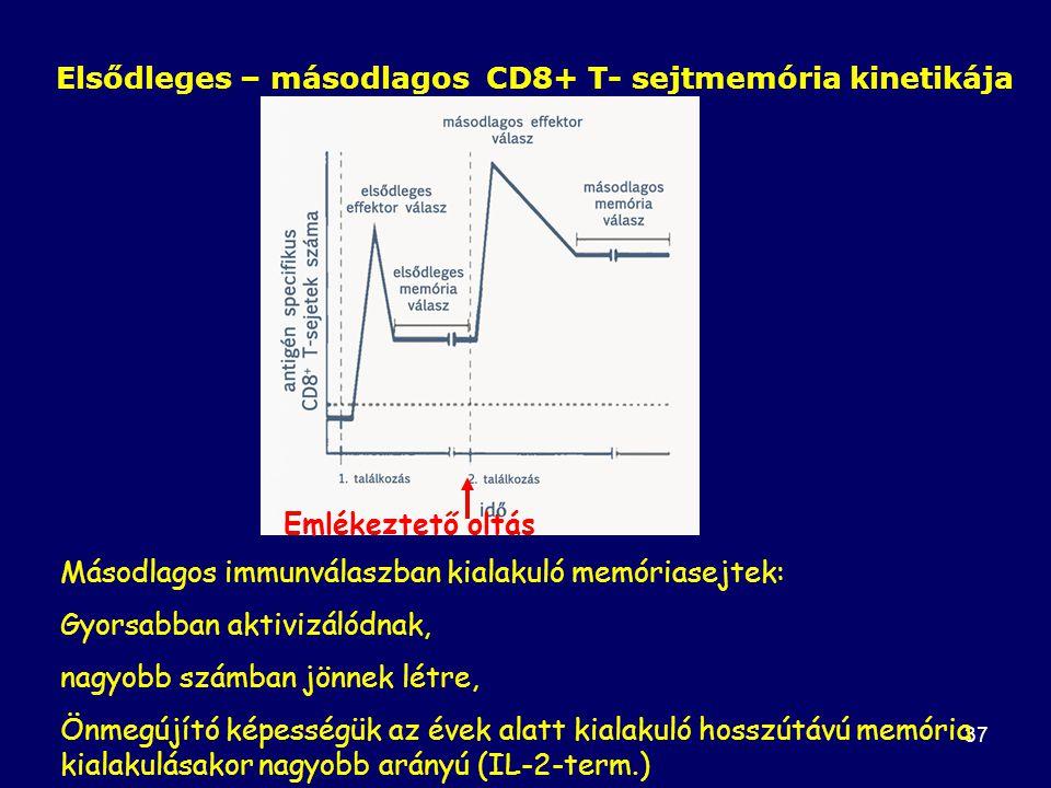 37 Elsődleges – másodlagos CD8+ T- sejtmemória kinetikája Másodlagos immunválaszban kialakuló memóriasejtek: Gyorsabban aktivizálódnak, nagyobb számban jönnek létre, Önmegújító képességük az évek alatt kialakuló hosszútávú memória kialakulásakor nagyobb arányú (IL-2-term.) Emlékeztető oltás