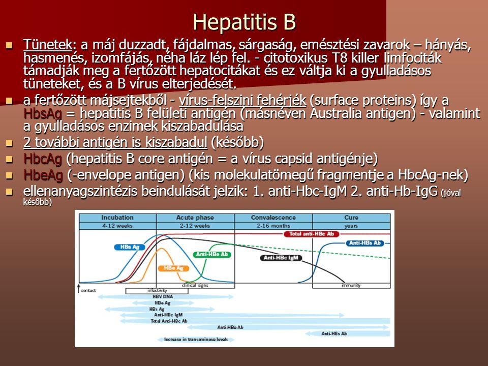 Hepatitis B Tünetek: a máj duzzadt, fájdalmas, sárgaság, emésztési zavarok – hányás, hasmenés, izomfájás, néha láz lép fel. - citotoxikus T8 killer li