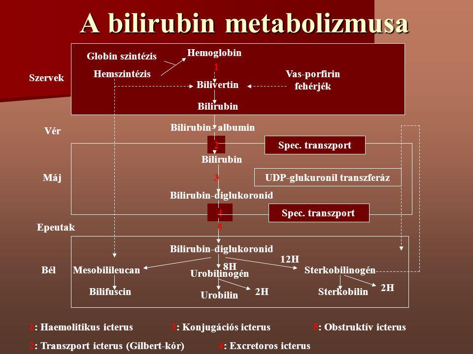A bilirubin metabolizmusa Hemszintézis Hemoglobin Bilivertin Bilirubin Globin szintézis Vas-porfirin fehérjék Bilirubin- albumin Bilirubin 2 3 Bilirub