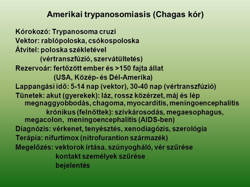 Amerikai trypanosomiasis (Chagas kór) Kórokozó: Trypanosoma cruzi Vektor: rablópoloska, csókospoloska Átvitel: poloska székletével (vértranszfúzió, sz