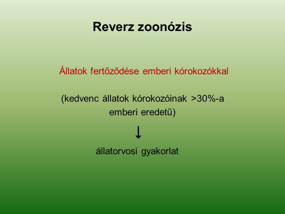 Reverz zoonózis Állatok fertőződése emberi kórokozókkal (kedvenc állatok kórokozóinak >30%-a emberi eredetű)  állatorvosi gyakorlat