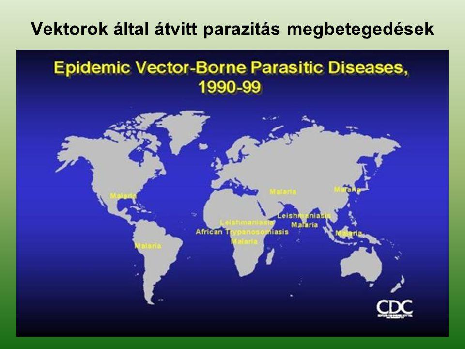 Főbb haematogén fertőző betegségek Typhus exanthemicus Febris recurrens (visszatérő láz) Malária Africai trypanosomiasis (álomkór) Ameriai trypanosomiasis (Chagas kór) Lyme-kór Kullancs encephalitis Sárgaláz /febris flava/ Dengue láz, (breakbone fever) Ízeltlábúak által terjesztett virusos hemorrhagiás láz Tüdőpestis (pestis)