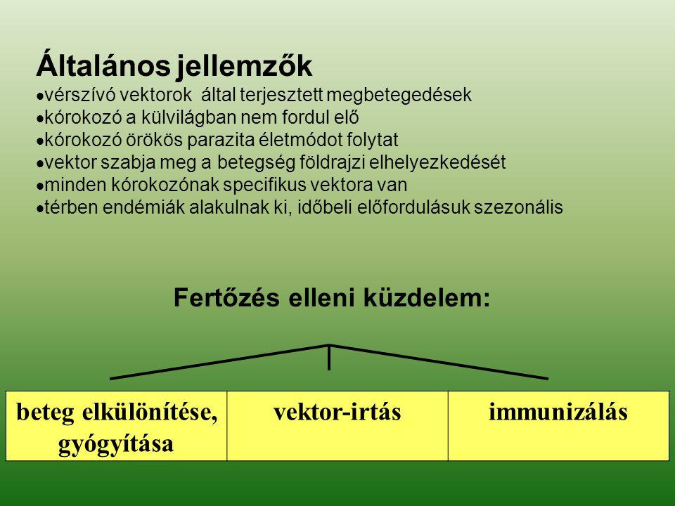 FOK 2009 Kutyák, macskák emberre terjedő hengeres féreg fertőzései TOXOCARA CANIS (KUTYA), TOXOCARA CATI (MACSKA)  állatok: végső gazdák > széklettel szórt peték > talajban 3-4 hét alatt lárvák  emberi fertőzés: gyermekek különösen veszélyben szennyezett élelmiszerek, játékok szennyezett élelmiszerek, játékok vékonybélben lárvák (nem fejlődnek ivarérett féreggé) > vándorlás, granuloma képződés: vékonybélben lárvák (nem fejlődnek ivarérett féreggé) > vándorlás, granuloma képződés: viscerális: májban, agyban viscerális: májban, agyban láz, hepatomegalia, eosinophilia, láz, hepatomegalia, eosinophilia, myocarditis, encephalitis, myocarditis, encephalitis, pneumonia, halál pneumonia, halál ocularis: szemben > vakság ocularis: szemben > vakság KEZELÉS: tiabendazol MEGELŐZÉS: higiéné