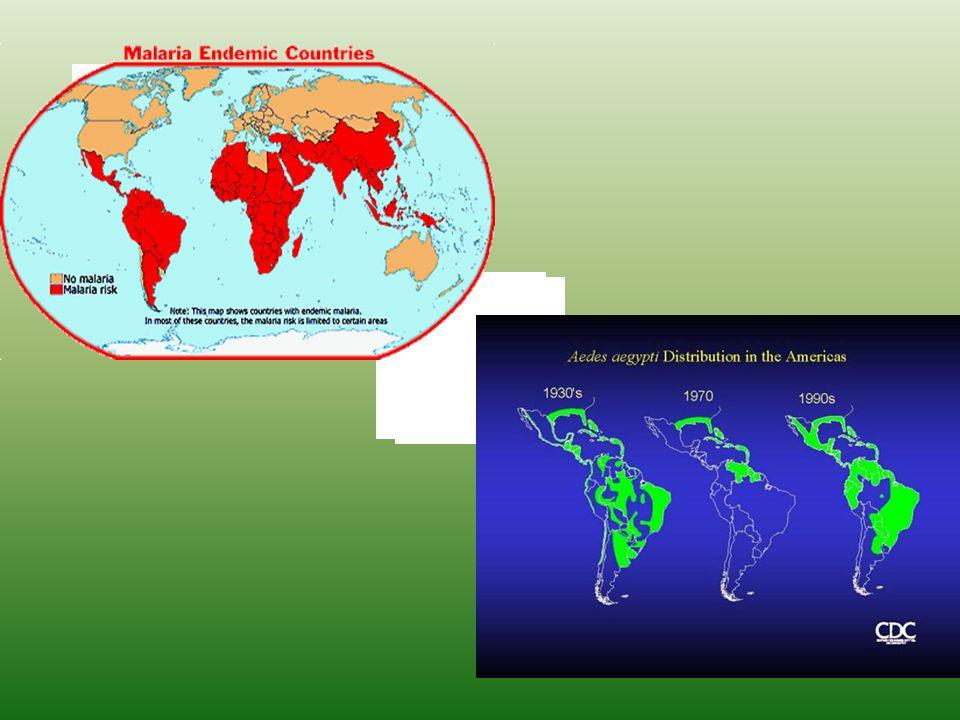 ÁLLATOKKAL TÖRTÉNŐ NEMI ÉRINTKEZÉS FERTŐZÉSEI (sodomia, zoophilia, paraphilia, zoogamia, zoosexualitás, bestialitás) Mezőgazdasági haszonállatok (birka, sertés, pulyka, ló, szarvasmarha, tyúk) Városokban kedvtelésből tartott állatok (kutya, macska, halak, kígyók, …)  férfiak 2-4%-a, nők 2%-a  sérülések (bacteriaemia, viraemia)  Gram negatív bélbaktériumok (Salmonella spp, Campylobacter spp, E.coli) Sarjadzó gombák Taylorella equigenitalis (lovak; emberi urethritis) Brucella canis (kutyák; emberi heregyulladás, sorvadás, agytályog, májgyulladás, endocarditis, láz – antibiotikum rezisztens) Streptococcusok, Enterobacteriumok Pasteurella multicida (emberi felső légúti hurut, vérmérgezés) Állati rühatkák (időleges megtelepedés) Toxoplasma gondii, Echinococcus sp, Giardia lamblia, Entamoeba histolytica Toxocara canis (emberi zsigerekben granuloma képződés)  Ajánlott: fertőtlenítés, biztonságos sex  Emberi nemibetegségek kórokozói nem fertőzik az állatokat