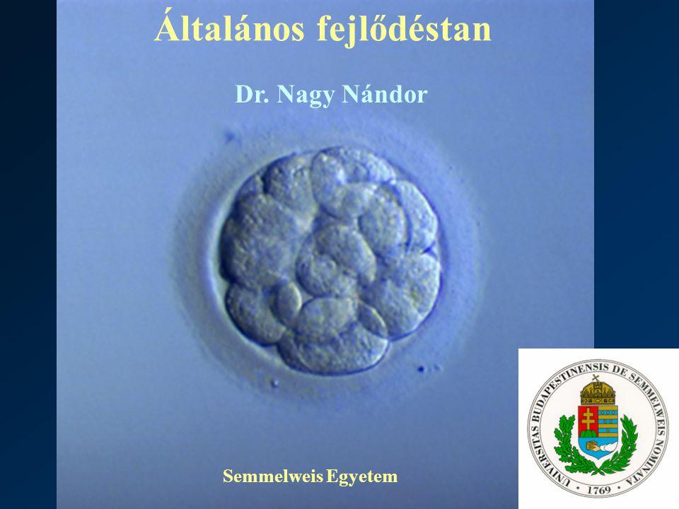 Általános fejlődéstan Semmelweis Egyetem Dr. Nagy Nándor