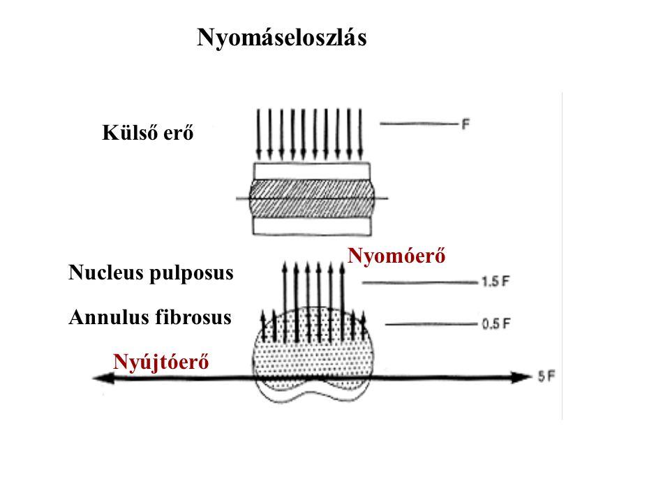 Nyomáseloszlás Külső erő Nucleus pulposus Annulus fibrosus Nyújtóerő Nyomóerő