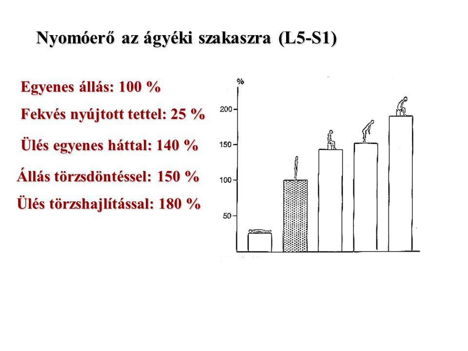 Nyomóerő az ágyéki szakaszra (L5-S1) Egyenes állás: 100 % Fekvés nyújtott tettel: 25 % Ülés egyenes háttal: 140 % Állás törzsdöntéssel: 150 % Ülés törzshajlítással: törzshajlítással: 180 %