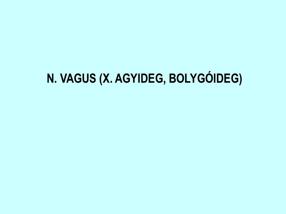 N. VAGUS (X. AGYIDEG, BOLYGÓIDEG)