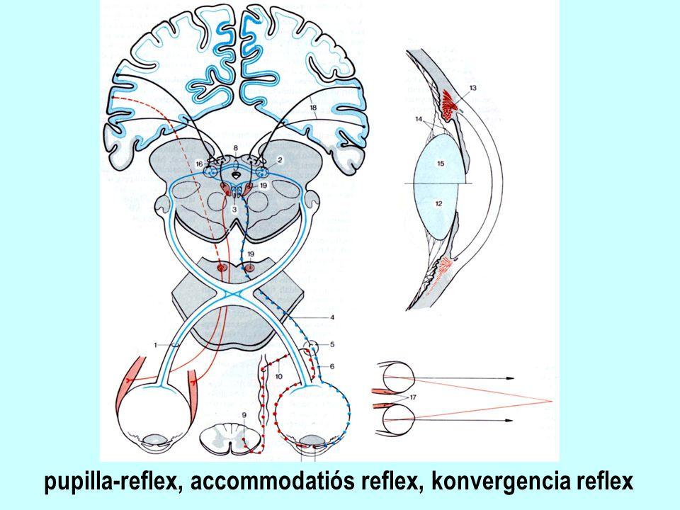 pupilla-reflex, accommodatiós reflex, konvergencia reflex