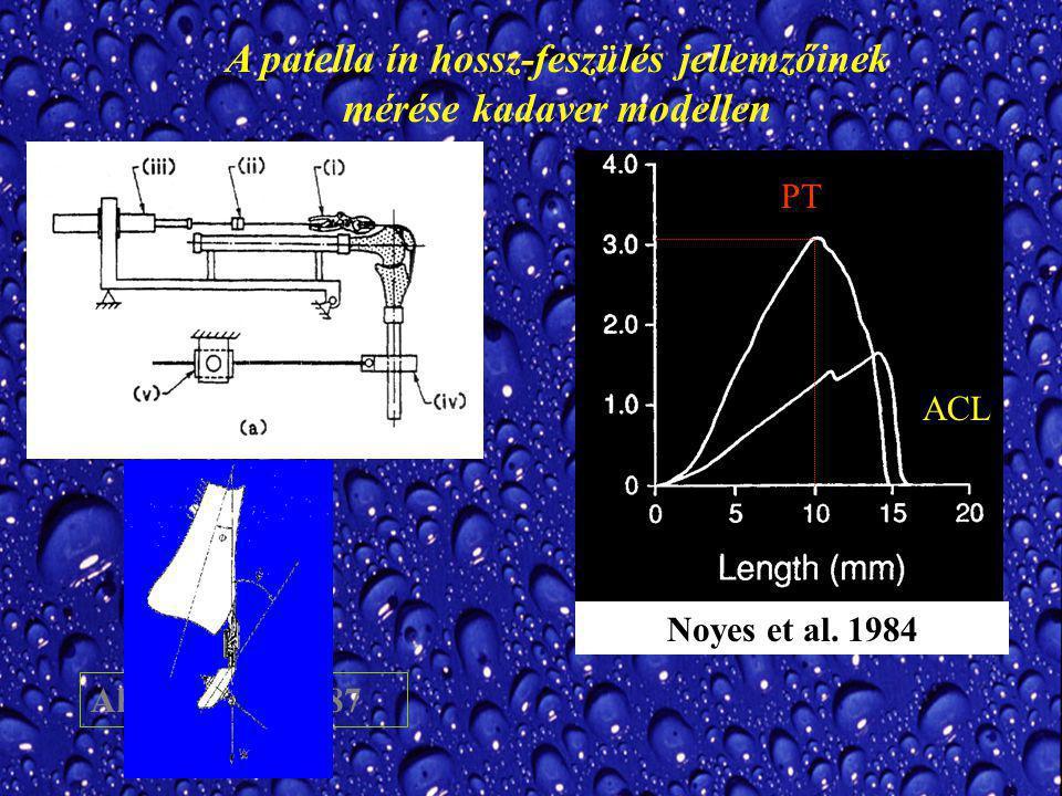 Ahmed et al.1987 A patella ín hossz-feszülés jellemzőinek mérése kadaver modellen Noyes et al.