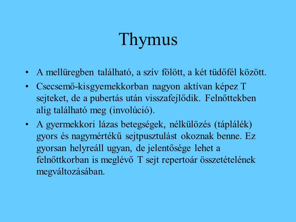 Thymus A mellüregben található, a szív fölött, a két tüdőfél között. Csecsemő-kisgyemekkorban nagyon aktívan képez T sejteket, de a pubertás után viss
