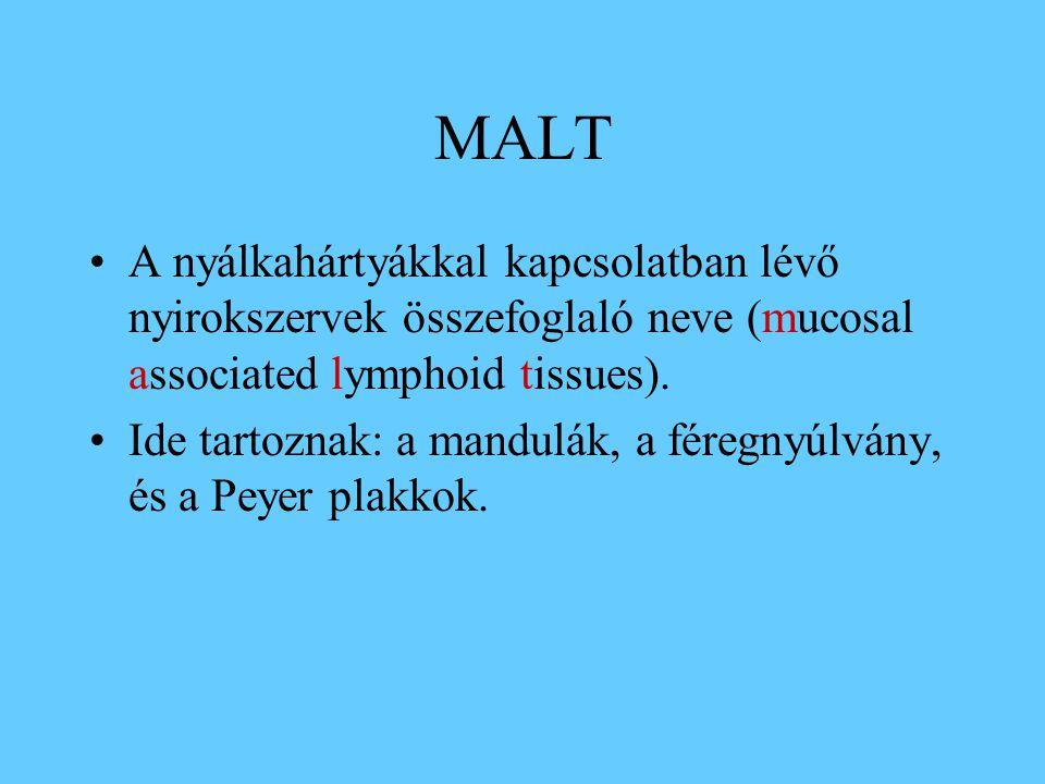MALT A nyálkahártyákkal kapcsolatban lévő nyirokszervek összefoglaló neve (mucosal associated lymphoid tissues). Ide tartoznak: a mandulák, a féregnyú