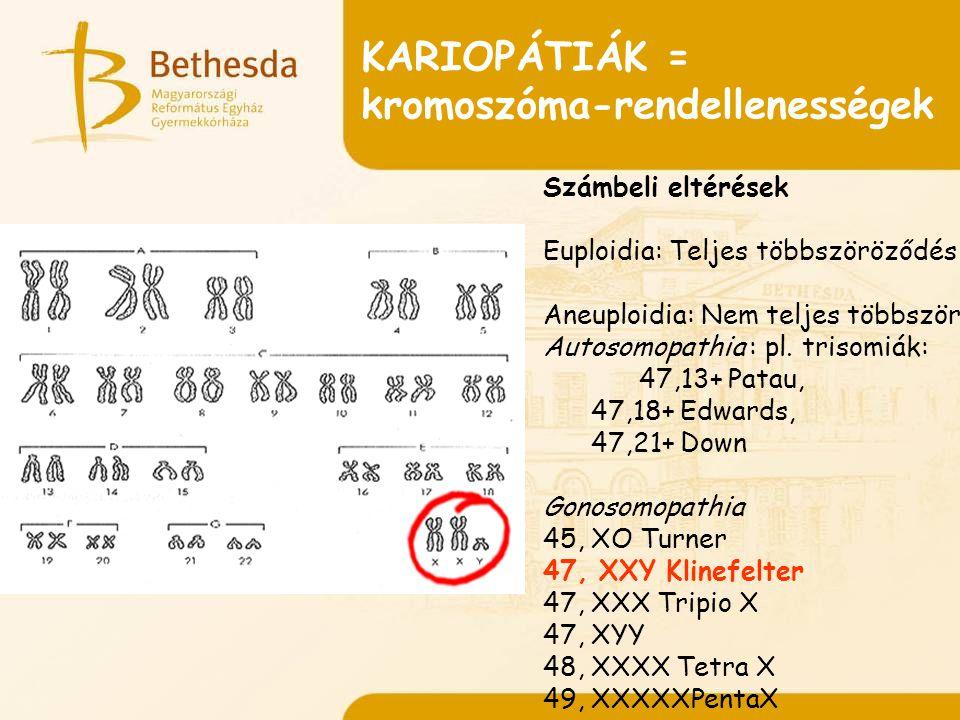 KARIOPÁTIÁK = kromoszóma-rendellenességek Számbeli eltérések Euploidia: Teljes többszöröződés Aneuploidia: Nem teljes többszöröződés Autosomopathia : pl.