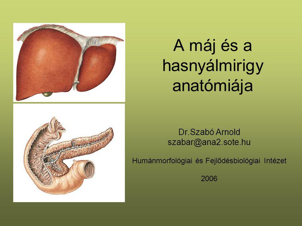 A máj és a hasnyálmirigy anatómiája Dr.Szabó Arnold szabar@ana2.sote.hu Humánmorfológiai és Fejlődésbiológiai Intézet 2006