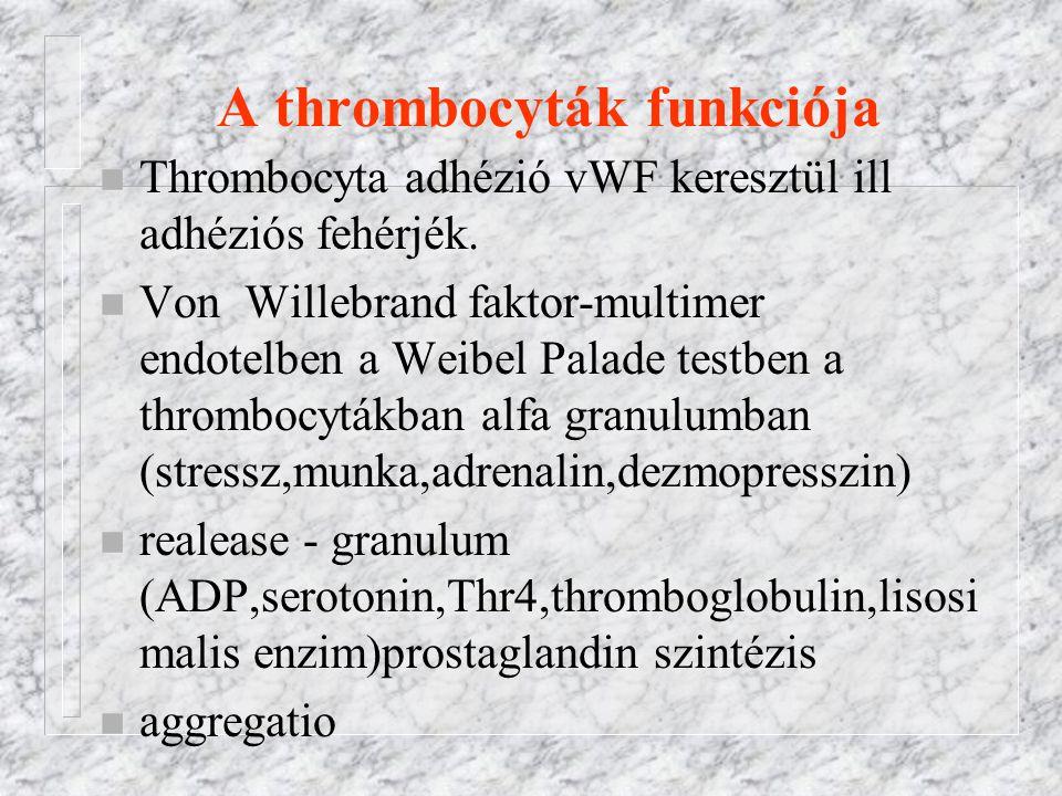A thrombocyták funkciója n Thrombocyta adhézió vWF keresztül ill adhéziós fehérjék. n Von Willebrand faktor-multimer endotelben a Weibel Palade testbe