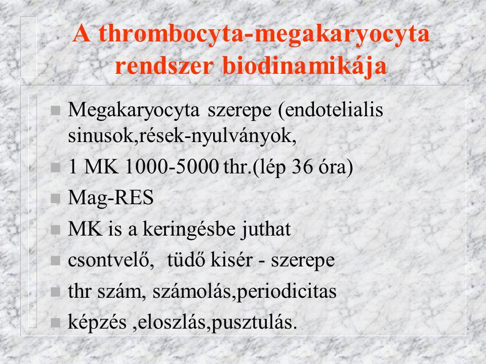 A thrombocyta-megakaryocyta rendszer biodinamikája n Megakaryocyta szerepe (endotelialis sinusok,rések-nyulványok, n 1 MK 1000-5000 thr.(lép 36 óra) n