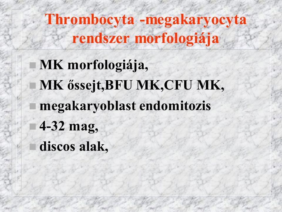 Thrombocyta -megakaryocyta rendszer morfologiája n MK morfologiája, n MK őssejt,BFU MK,CFU MK, n megakaryoblast endomitozis n 4-32 mag, n discos alak,