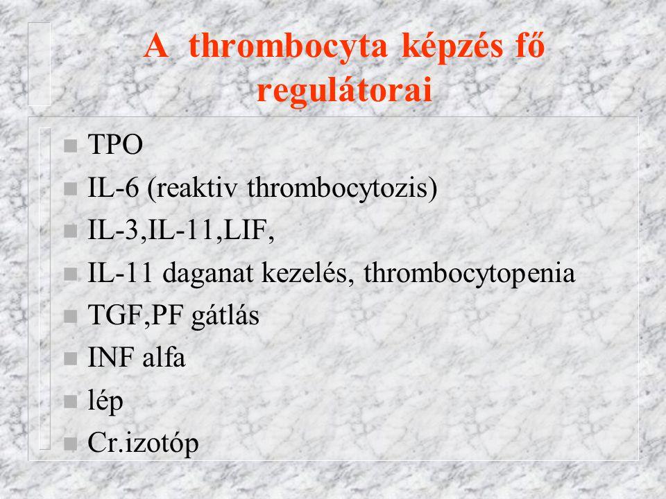 A thrombocyta képzés fő regulátorai n TPO n IL-6 (reaktiv thrombocytozis) n IL-3,IL-11,LIF, n IL-11 daganat kezelés, thrombocytopenia n TGF,PF gátlás n INF alfa n lép n Cr.izotóp
