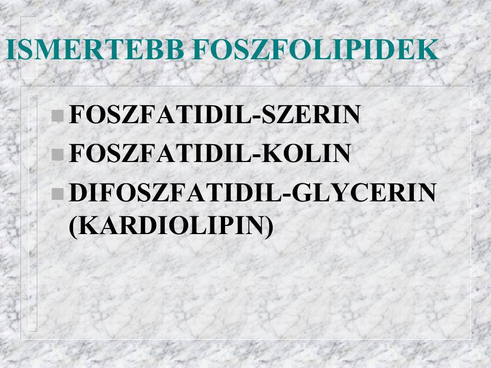 ISMERTEBB FOSZFOLIPIDEK n FOSZFATIDIL-SZERIN n FOSZFATIDIL-KOLIN n DIFOSZFATIDIL-GLYCERIN (KARDIOLIPIN)