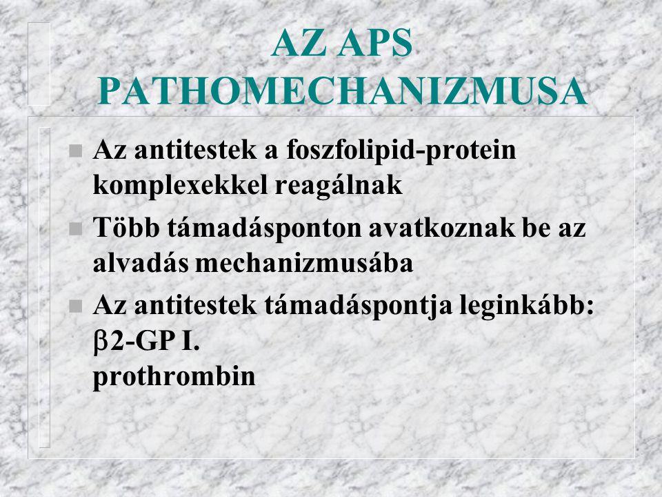 AZ APS PATHOMECHANIZMUSA n Az antitestek a foszfolipid-protein komplexekkel reagálnak n Több támadásponton avatkoznak be az alvadás mechanizmusába n Az antitestek támadáspontja leginkább:  2-GP I.