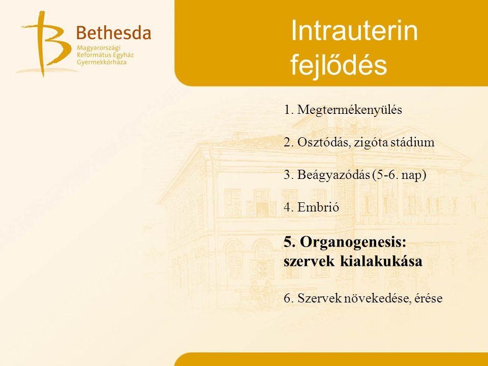 Intrauterin fejlődés 1. Megtermékenyülés 2. Osztódás, zigóta stádium 3. Beágyazódás (5-6. nap) 4. Embrió 5. Organogenesis: szervek kialakukása 6. Szer