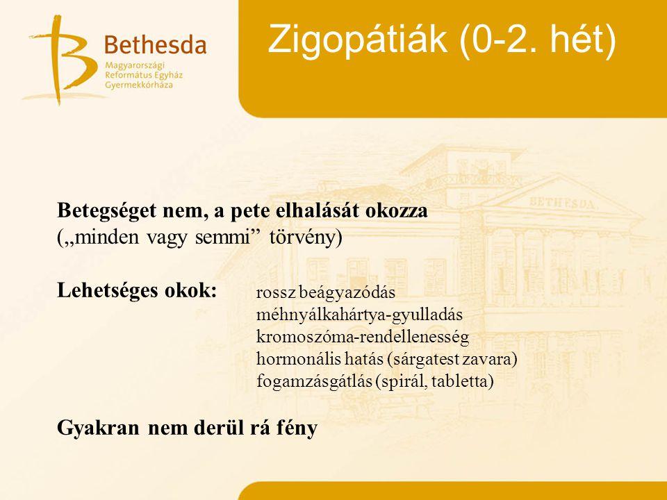 Embriogenesis (2-12. hét)