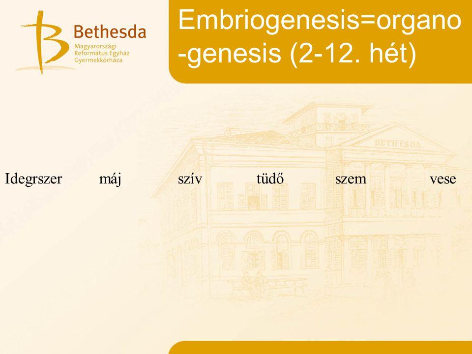 Embriogenesis=organo -genesis (2-12. hét) Idegrszermáj szív tüdőszemvese