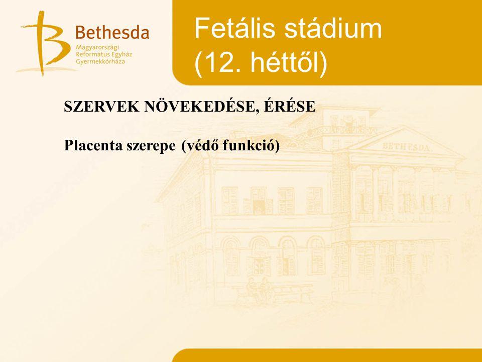 Fetális stádium (12. héttől) SZERVEK NÖVEKEDÉSE, ÉRÉSE Placenta szerepe (védő funkció)
