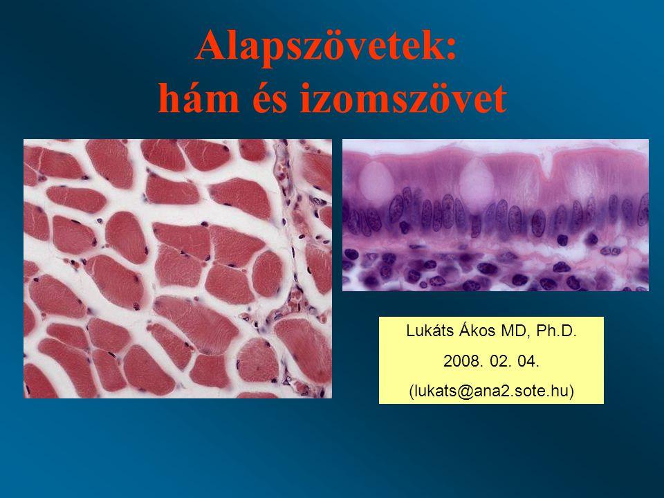 Alapszövetek: hám és izomszövet Lukáts Ákos MD, Ph.D. 2008. 02. 04. (lukats@ana2.sote.hu)