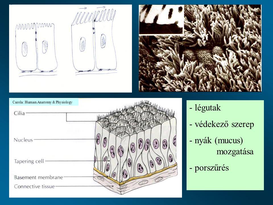 - légutak - védekező szerep - nyák (mucus) mozgatása - porszűrés Carola: Human Anatomy & Physiology