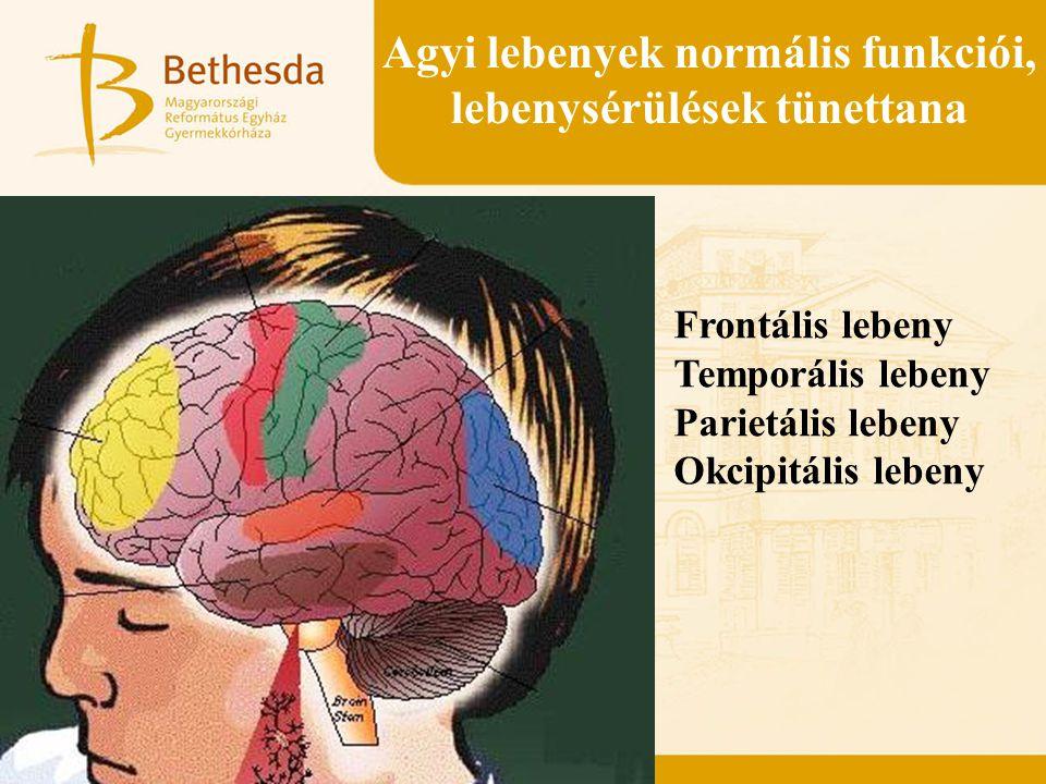 Agyi lebenyek normális funkciói, lebenysérülések tünettana Frontális lebeny Temporális lebeny Parietális lebeny Okcipitális lebeny