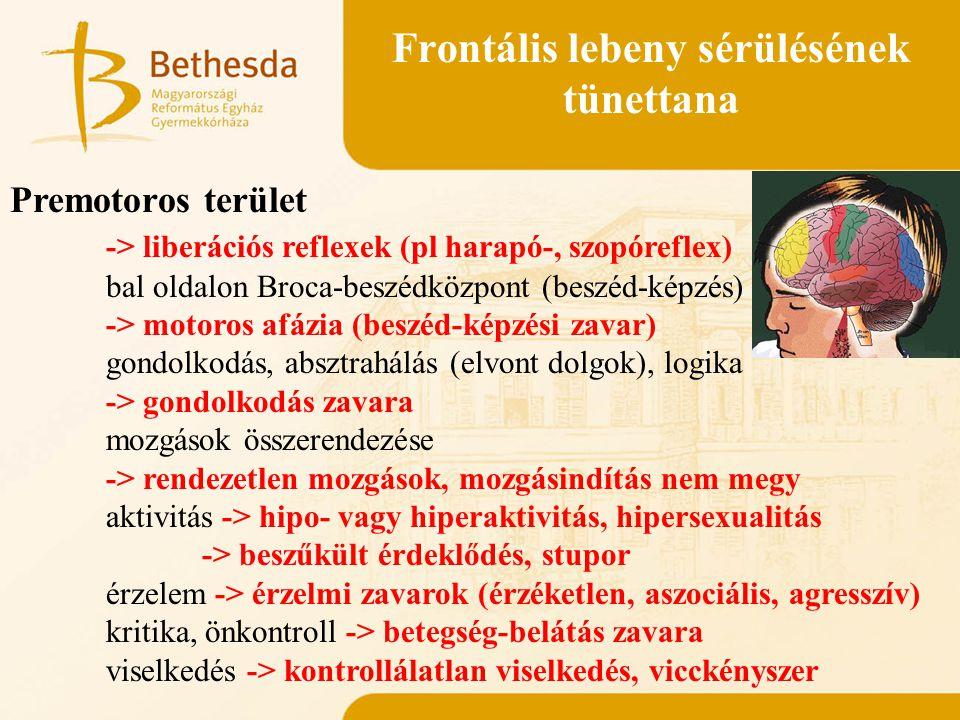 Frontális lebeny sérülésének tünettana Premotoros terület -> liberációs reflexek (pl harapó-, szopóreflex) bal oldalon Broca-beszédközpont (beszéd-kép